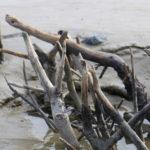 Holz im Sand
